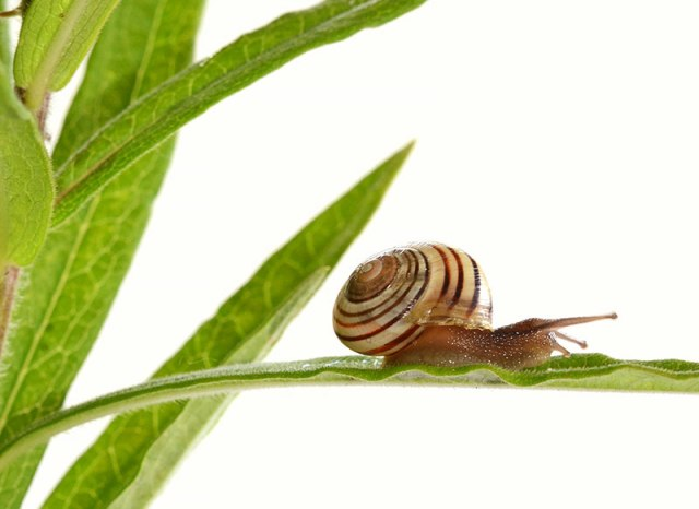 1-Snail-2