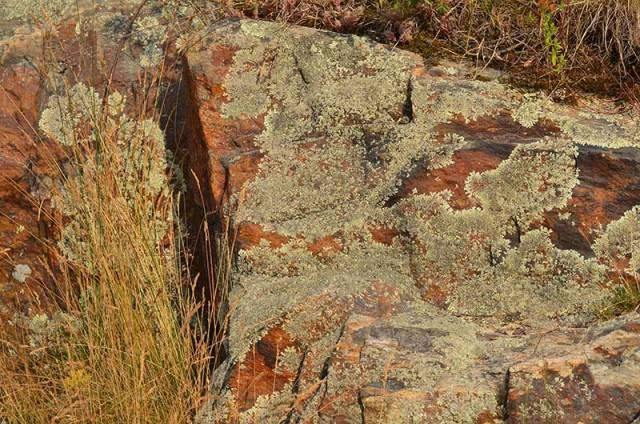 Rocks-with-lichen