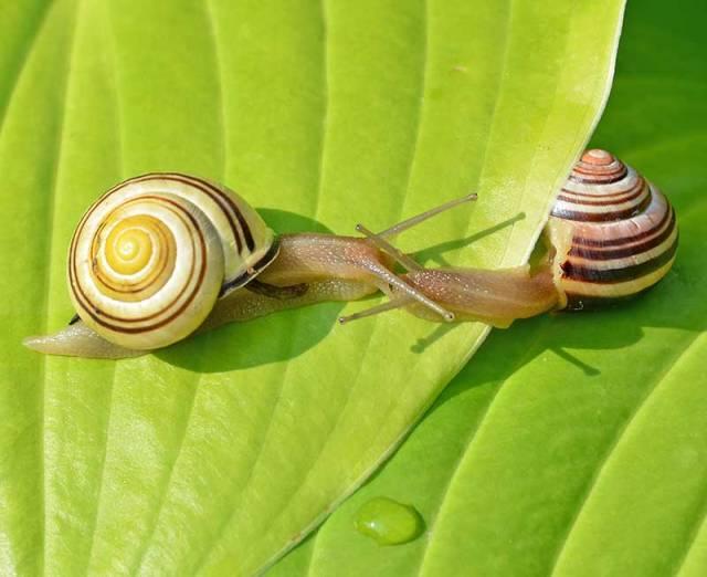 Snail-Meeting