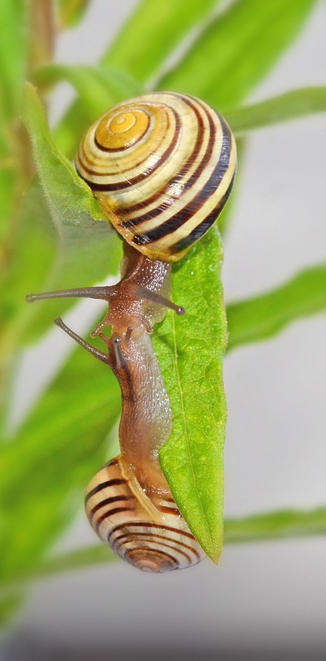 Snails-6