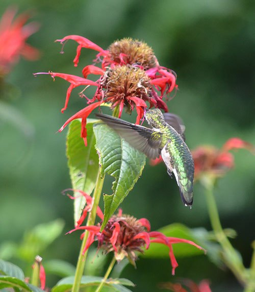 Best Food Hummingbird Feeder