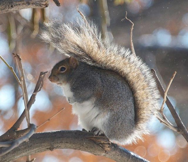 Backlit-Squirrel