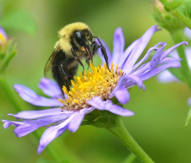 Bee-Nectaring