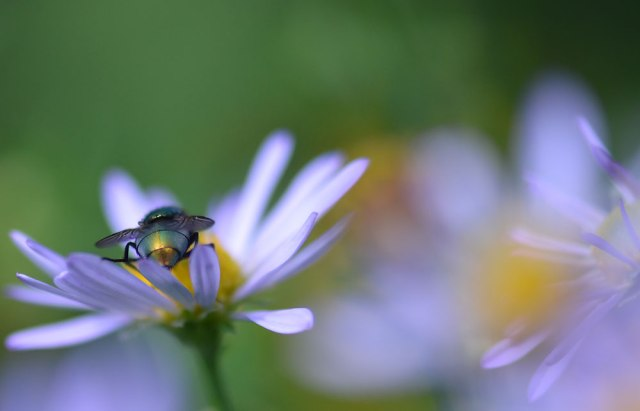 Fly-on-Aster
