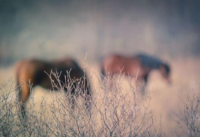 horseroadside