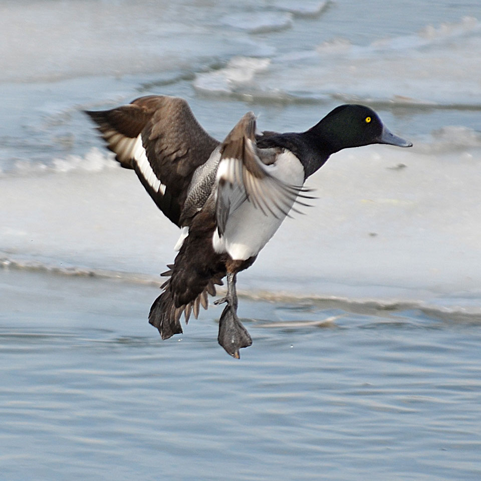 Why I Like Photography >> Birds in Winter Weather – Birds, Birds and More Birds | Nature and Wildlife Pics