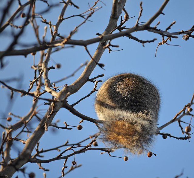 Squirrel-Butt