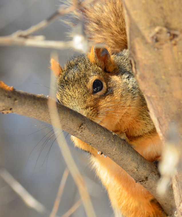 Squirrel-in-Woods-2