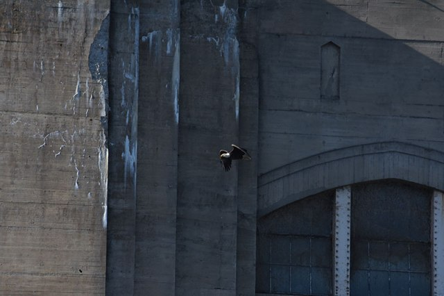 Big-Dam-Small-Eagle