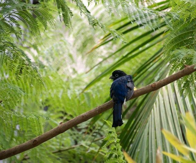 Bird--blue
