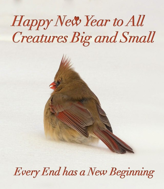 January-Cardinal