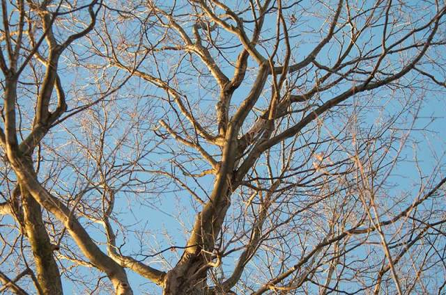 Sun-n-Trees