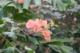 Tropical-Flowers-1