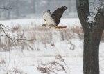 Hawk1-12-15
