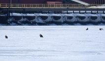 5-Eagles-on-Ice