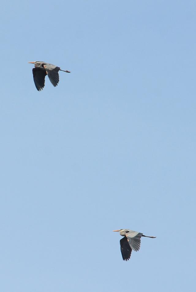 2-Herons