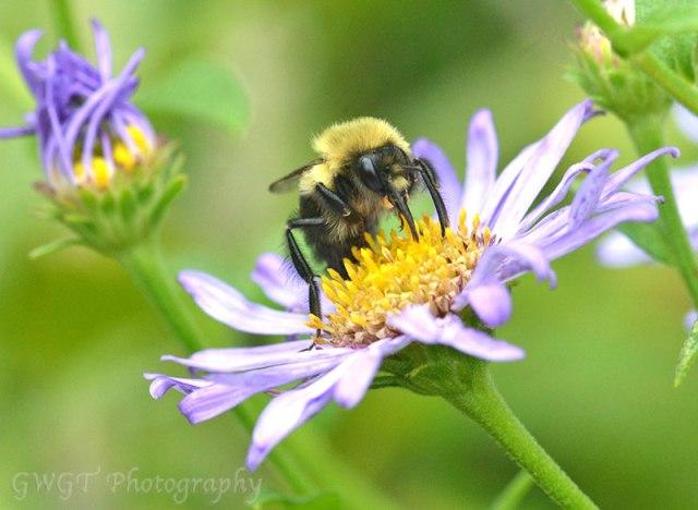 Bee-12