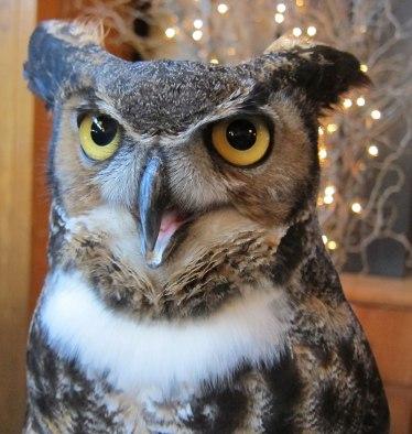 Hawk Mountain Horned Owl