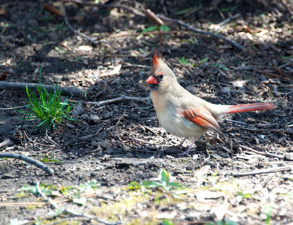 Do You Know This Cardinal?