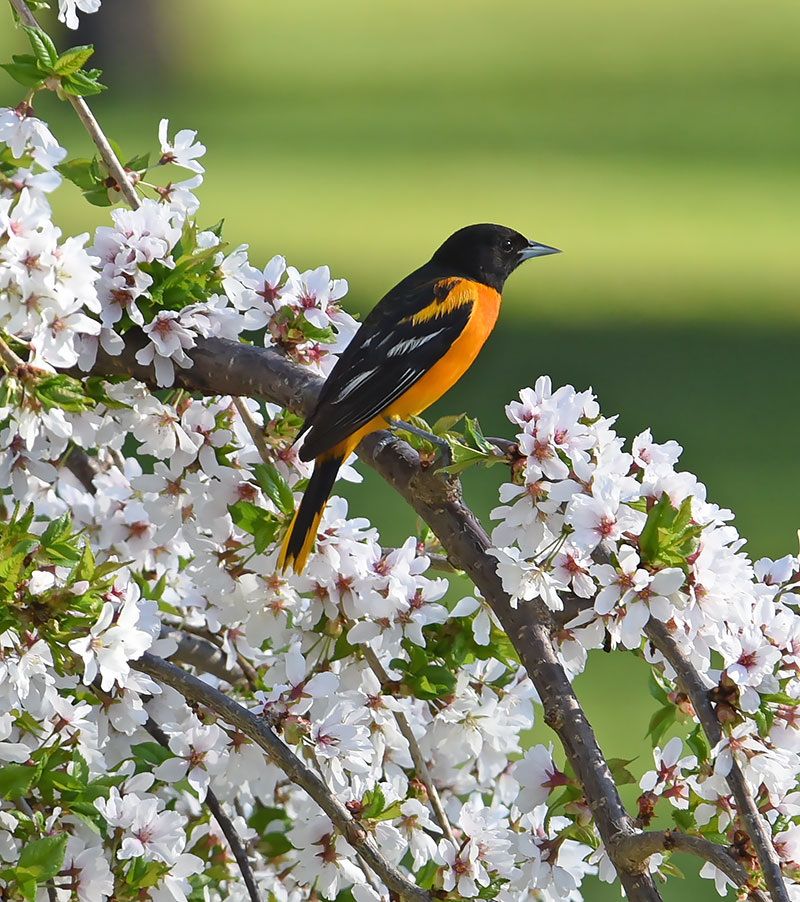 Colorful Birds of Spring