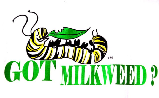 Got-Milkweed