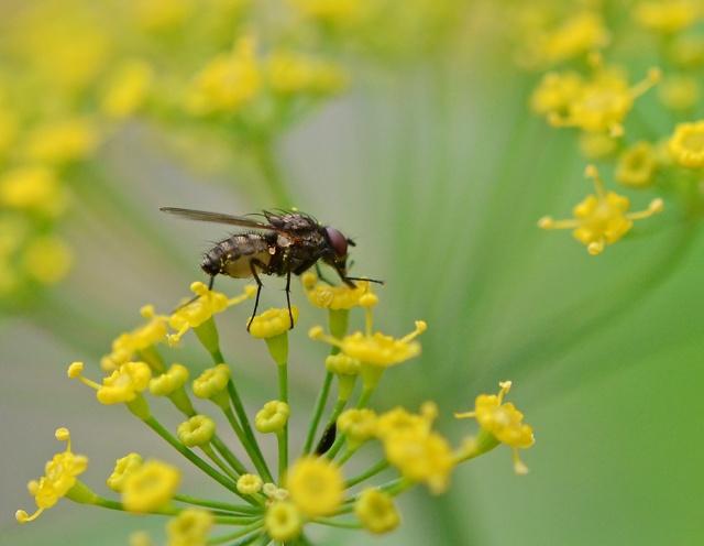 Tiny-Fly-2