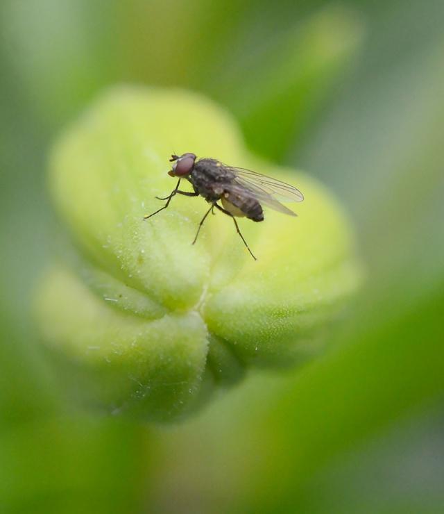Tiny-Fly