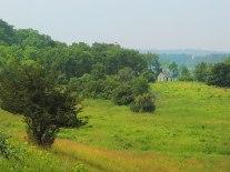 Stella-Niagara-Preserve-3