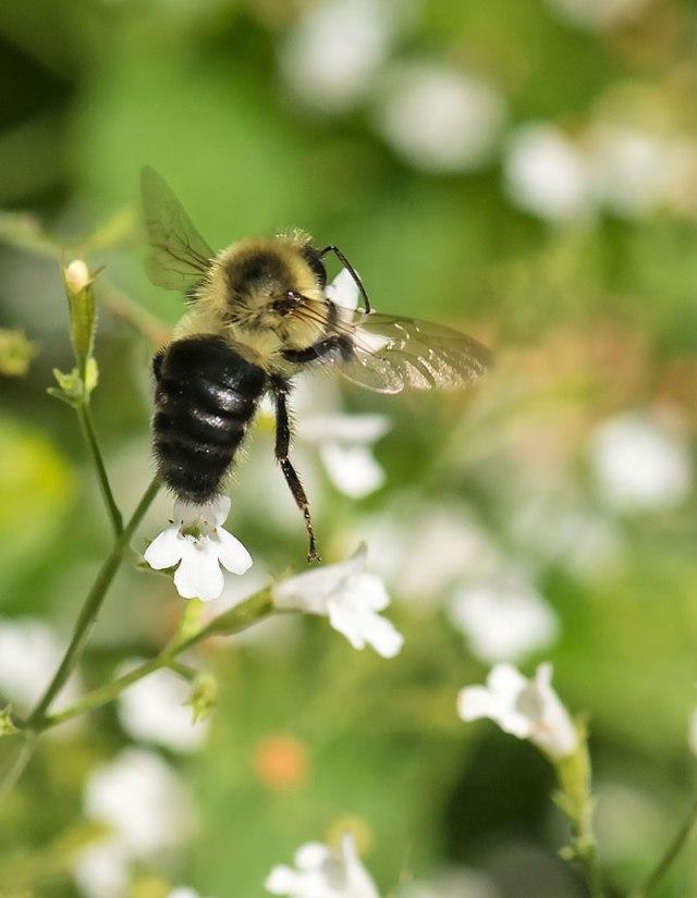 Tiny-Bee