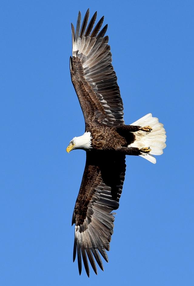 eagle-banking