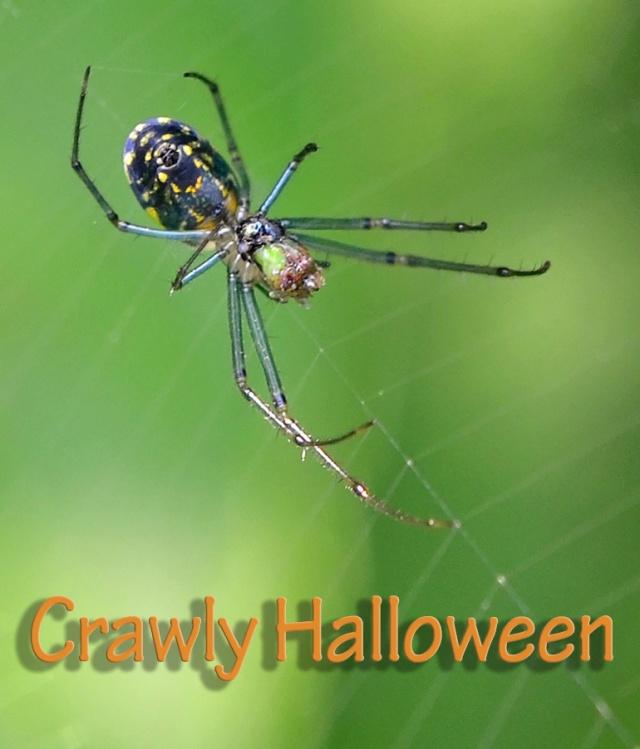 spider-crawly