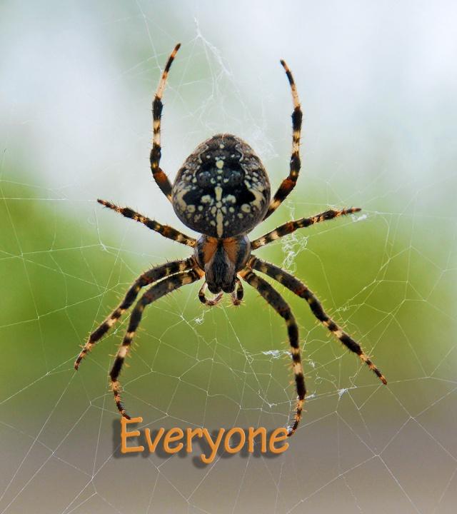 spider-everyone