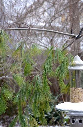 pine-perch-1