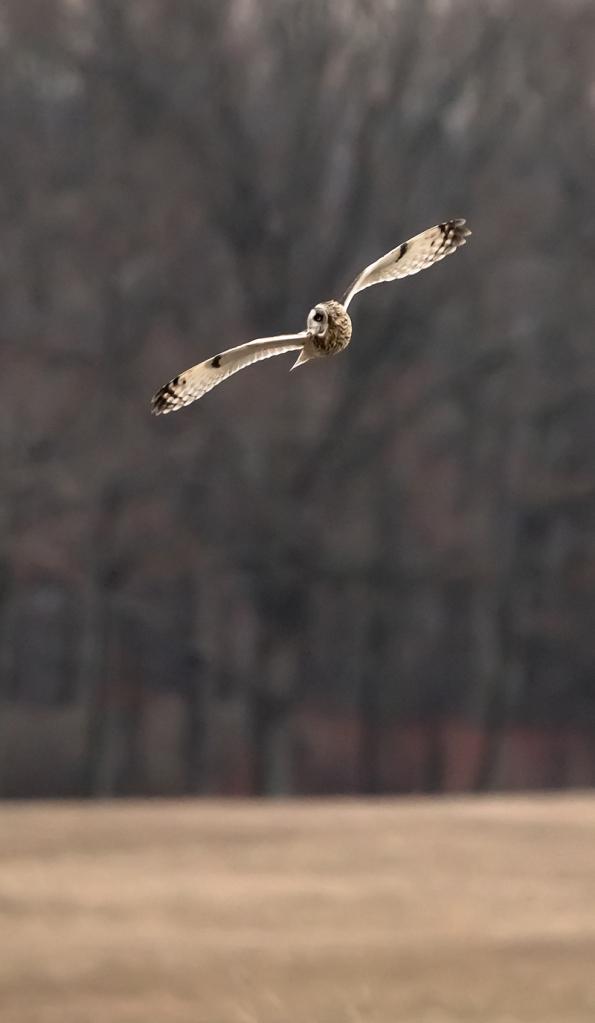 owl-banking