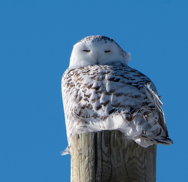pole-snowy