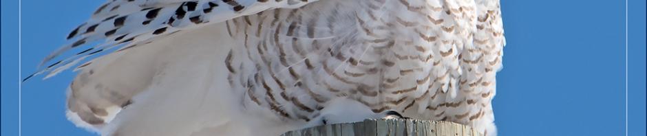 Four Owls Nature S Greatest Rar